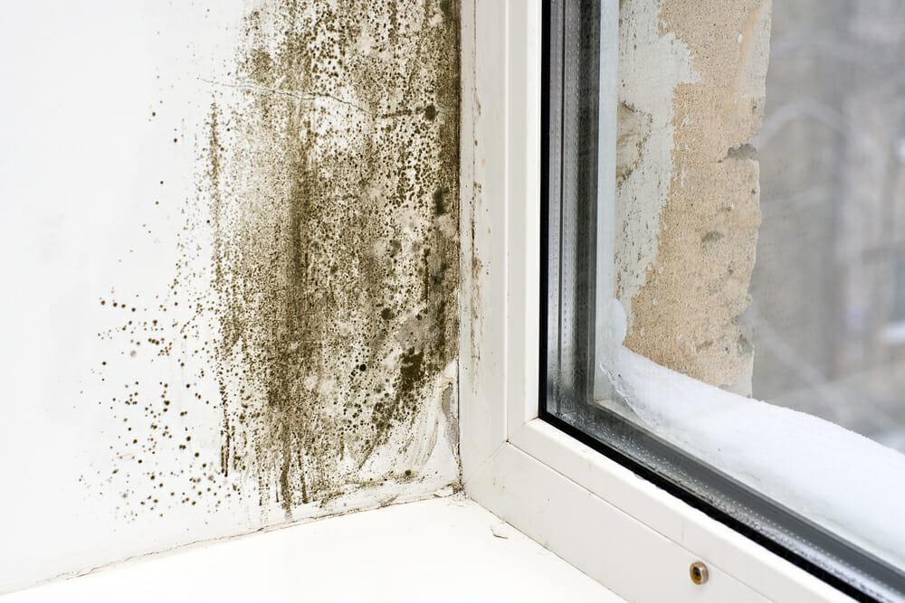 mold near windows